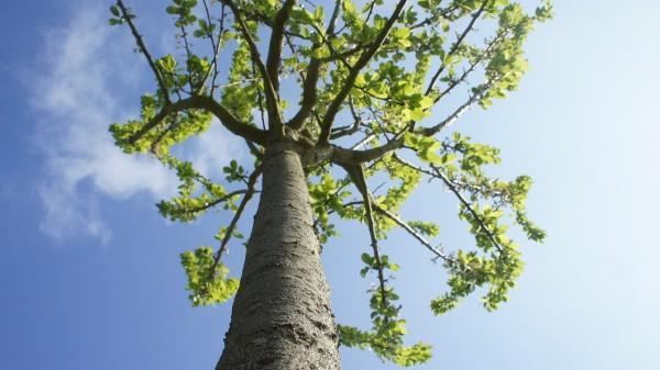 trees-587680_1280