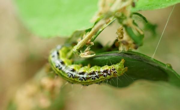 caterpillar-2237869_1280