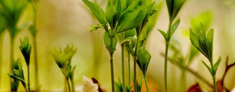 fairnatur_fuer-den-garten-pflanzennahrung