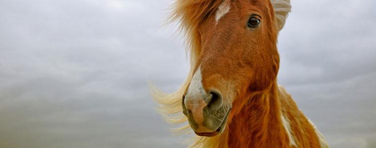fairnatur_fuer-das-tier-pferde
